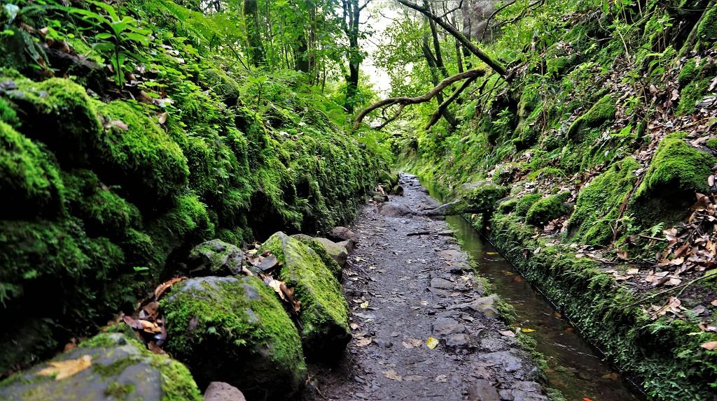 Levadawanderung Madeira Levada do Caldeirão Verde (PR9)